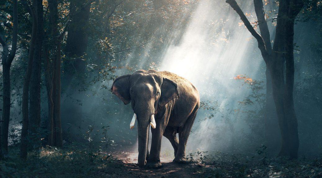 elephant-1822636_1920